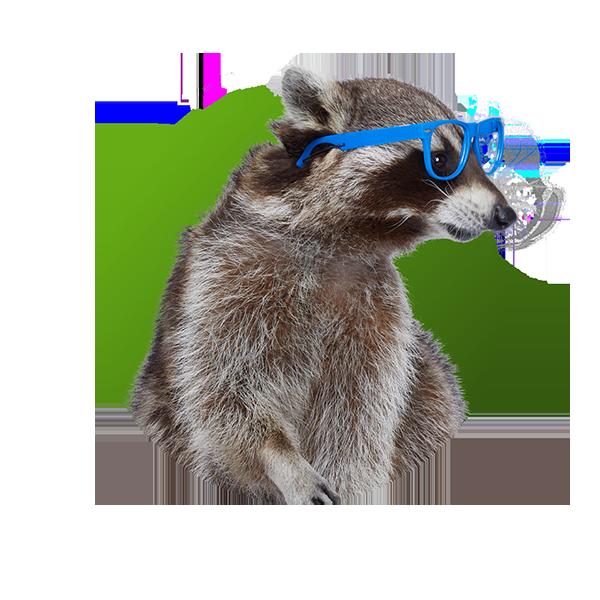 Raccoon - Gladys Glass