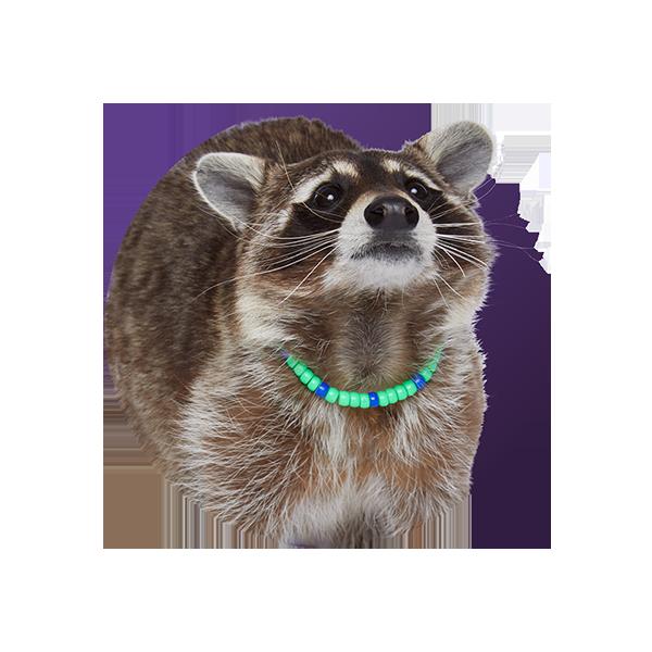 Raccoon - Nyla P. Lastic