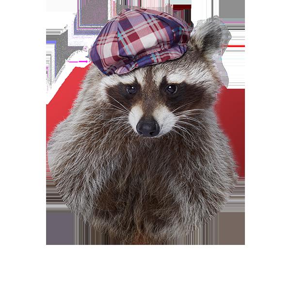 Raccoon - Paper MacKay