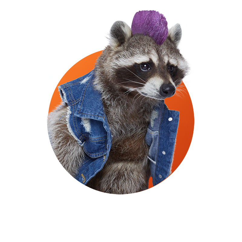 Raccoon - Precious Metale
