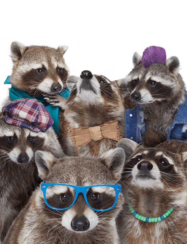 Recycling Raccoon Squad