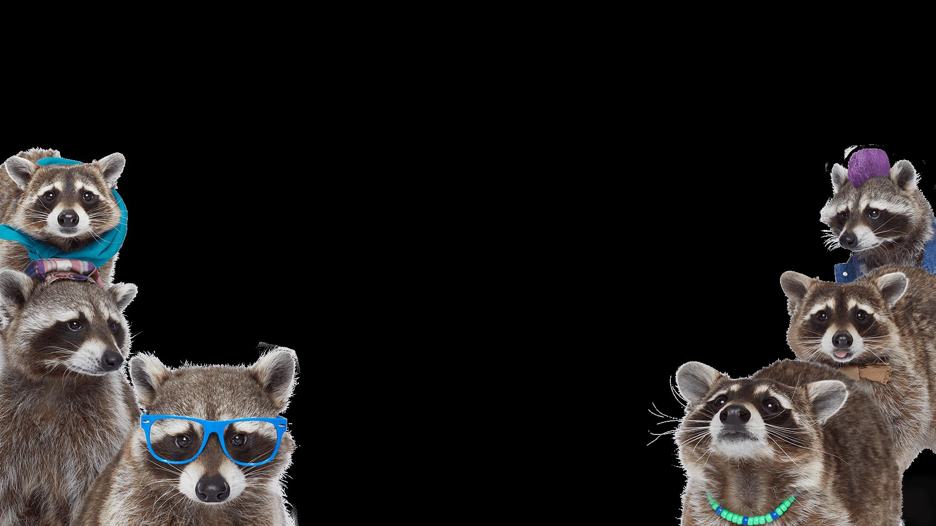 Recycling Raccoon Squad
