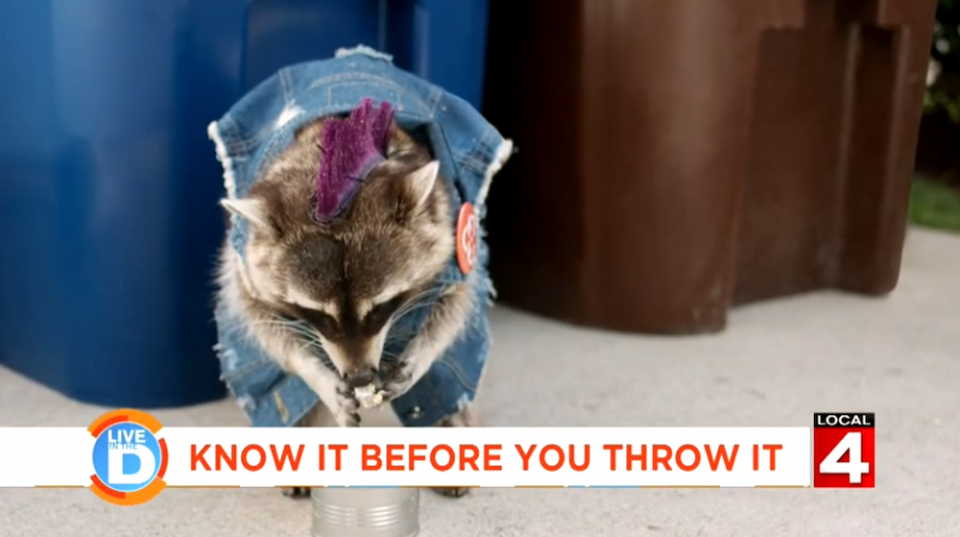 Recycling Racoons Commerical