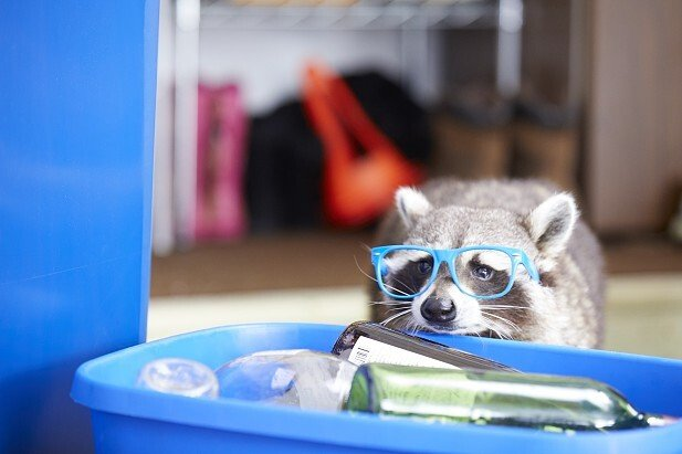 Recycling Raccoons